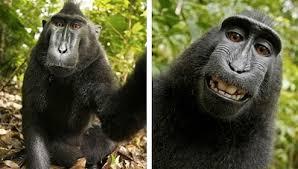 animales que el fotoperiodismo hizo famosos