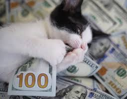 weird college scholarships pacific union college admissions blog don t let cash cat steal your college cash