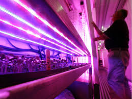 Garden Hits & Myths: Are <b>LED grow lights</b> worth the investment ...