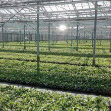 Work in <b>greenhouses</b> -
