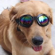 <b>Waterproof Foldable Pet Dog</b> Sunglasses Big Pet Eyewear Dog ...