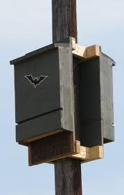 ideas about Bat Box on Pinterest   Build A Bat House  Bat    Bat House Ideas Worth Hanging Around For   Back to back Bat Box