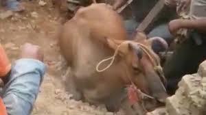Can <b>Animals</b> Sense Earthquakes?