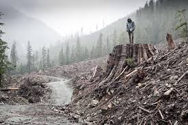 the global free trade economy is outgrowing the capacity of the    for this new world civilization  it was deforestation and soil erosion that undermined agriculture  changes in climate   also have played a role  food
