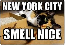 New York City Cat Meme - Cat Planet | Cat Planet via Relatably.com