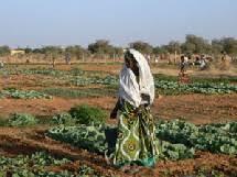 Agriculture / Khabou : 300 millions en fumée
