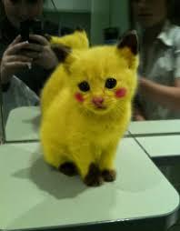 Résultat de recherche d'images pour 'image de pikachu mignon'