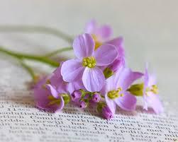 Resultado de imagen de flores y libros