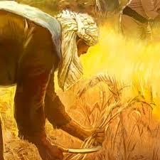 Resultado de imagem para joio e trigo bíblia