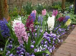<b>Удобрения</b> для первоцветов, <b>луковичных</b> растений: правила ...