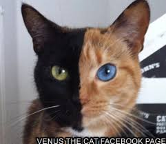 Venus the Two Faced Cat | Know Your Meme via Relatably.com