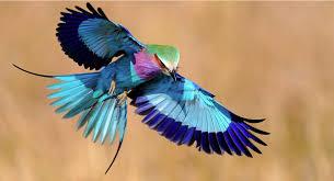 Resultado de imagem para pássaros exóticos