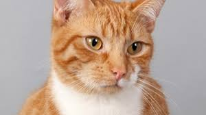 Image result for images of different colored cats