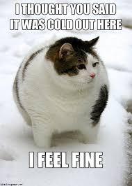 Fluffy Cat : funny via Relatably.com