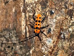Kartal'da Böcek İlaçlama