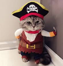 Cute pet costumes for <b>Halloween</b> and <b>Christmas</b> | AliExpress Blog