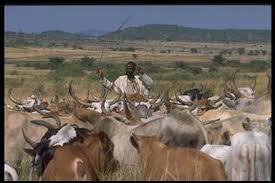 Image result for nomadic pastoralism