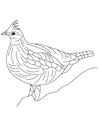 Small Picture Heavily built grouse coloring page Download Free Heavily built