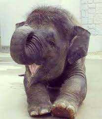 <b>Baby Elephant</b> | สัตว์, สัตว์น่ารัก, ลูกสัตว์