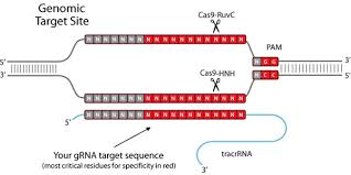 Image result for Images of CRISPR