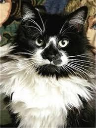 Full Square <b>Diamond</b> Painting Cat <b>5D Diy Diamond</b> Embroidery ...