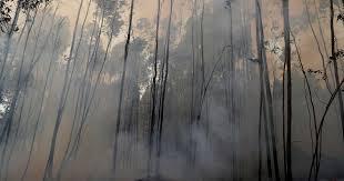 Governo reconhece como catastrófe natural fogos de Vila de Rei e Mação
