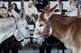 where s the love for donkeys the new york times donkeys during a demonstration at the donkey welfare symposium at the cornell college of veterinary medicine in ithaca n y in
