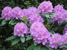 Kết quả hình ảnh cho hoa đẹp các loài
