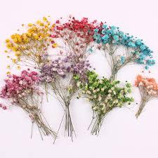 Мини Сушеный <b>Цветок</b> Один <b>Букет</b> Гипсофилы натуральный ...