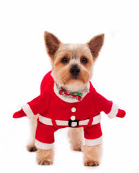 Yoriki <b>Костюм</b> для собак <b>карнавальный Дед Мороз</b> купить по ...