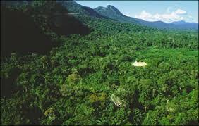Resultado de imagem para imagens da mata amazonica