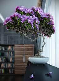indoor plants for interior decoration decorfruits bonsai tree interior