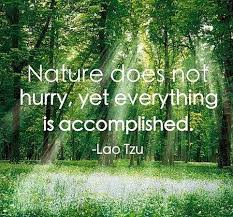 All About Living With Life: 25 Nature Quotes to Embrace