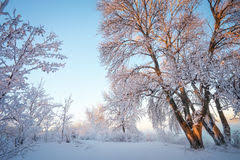 Afbeeldingsresultaat voor afbeeldingen berijpte bomen