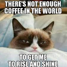 Best Grumpy Cat Memes that You'll Ever See via Relatably.com