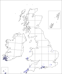 Cicendia filiformis | Online Atlas of the British and Irish Flora