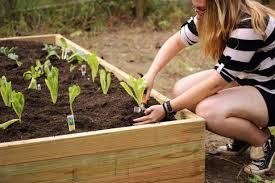 Build Cheap <b>Raised Garden Beds</b> | Inexpensive Raised Beds | HGTV