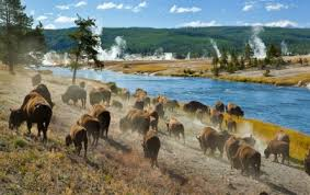Image result for pictures of yellowstone
