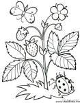 Раскраски растенья