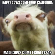 Annoying Mad Cow memes   quickmeme via Relatably.com