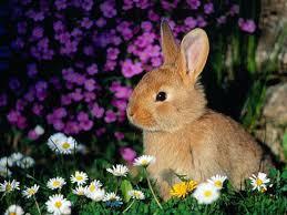 Résultat de recherche d'images pour 'lapin photo'