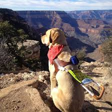 6 <b>Dogs</b> That <b>Are Making the World</b> a Better Place | The <b>Dog</b> People ...