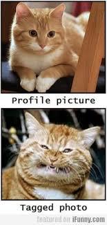 231 Best Cat Humour images | Crazy cats, <b>Funny cats</b>, Funny <b>animals</b>