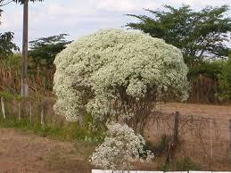 Resultado de imagem para neve cobre plantas