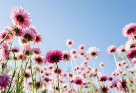 20 Annual <b>Flowers</b> for Every Season   ProFlowers