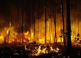 Image result for images  of burnt forests