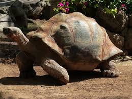 """Résultat de recherche d'images pour """"tortue géante"""""""