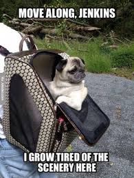 Move along - dog meme | Funny Dirty Adult Jokes, Memes & Pictures via Relatably.com