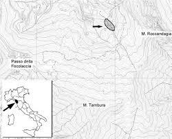 euphorbia hyberna subsp. insularis (euphorbiaceae) nelle alpi ...