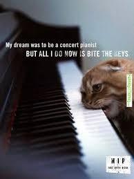 FunniestMemes.com - Funny Memes - [Catnip... not even once!] via Relatably.com